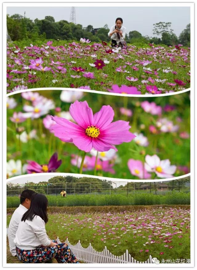 周末,让我们到芦洪市赏花