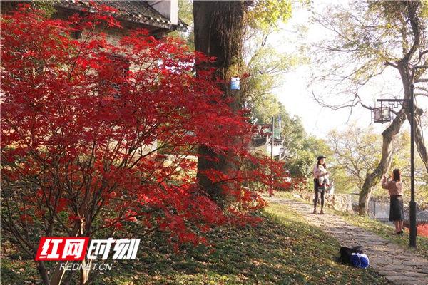 图游永州:蓝山艳丽的初冬