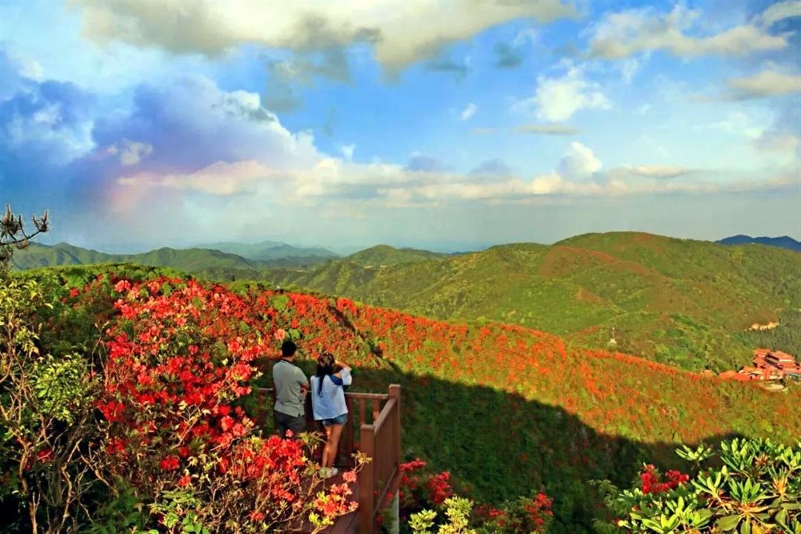 28种杜鹃次第开 阳明山迎最美季