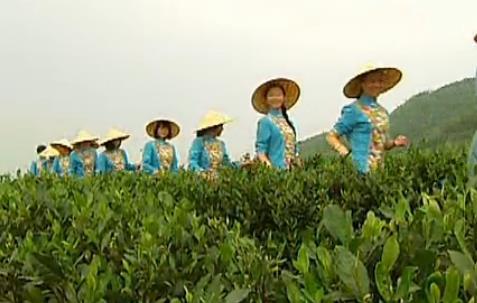 《百叠岭茶歌》蓝山百叠岭茶叶