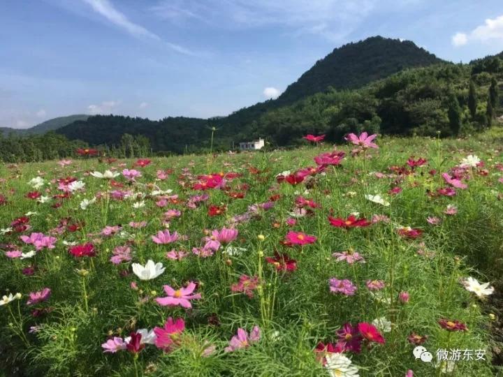 图游永州:南溪花海去看花